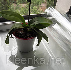 Прозрачное покрытие, мягкое стекло для защиты от загрязнений обувных полок, фото 2