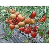 Семена томата Агилис F1, 500 семян, фото 2