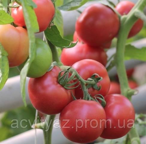 Семена томата Пинк Шайн F1, 500 семян