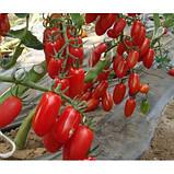 Семена томата Поззано F1, 500 семян, фото 2