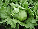 Семена салата Даймонд, 5000 семян, фото 2