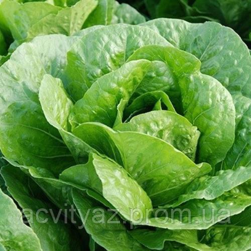 Насіння салату Бацио, 1000 насіння