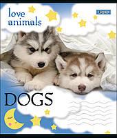 Тетрадь школьная А5/12 лин. 1В LOVE ANIMALS, набор 25 шт., код: 764471, фото 4