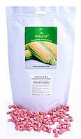 Цукрова кукурудза Чемпіон F1, Sh2-тип, 1000 насіння на 1.5 сотки, 76-78 днів, ранньостиглий