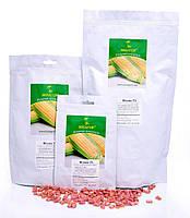 Цукрова кукурудза Фіона (Солодка Мрія) F1, 1000 насіння на 1.5 сотки, ранньостиглий (69-71 днів), Sh2-тип
