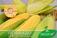 Цукрова кукурудза Орландо F1, Sh2-тип, 200 насінин на 30 м2, 78-80 днів