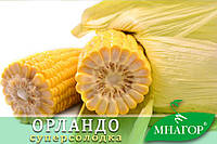 Цукрова кукурудза Орландо F1, Sh2-тип, 4000 насіння на 6 соток, 78-80 днів