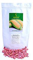 Сахарная кукуруза Джамала F1, Sh2-тип, 1000 семян на 1.5 сотки,  73-75 дней, фото 1
