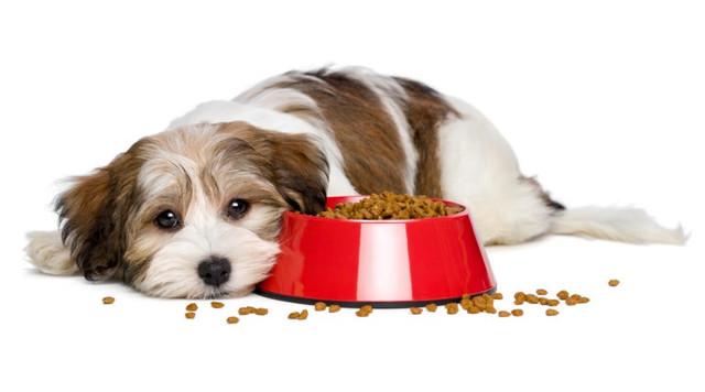 Корм сухой для собак
