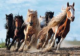 """Пазли - (1000 елм.) - """"Скачуть коні"""" / Trefl"""