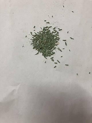 Семена газонной травы Универсально-Спортивная Barenbrug Bar Power RPR 1кг, фото 2