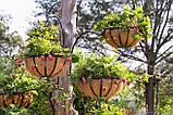 Клубника Мурано сорт нейтрального дня, для теплиц, вазонов, декоративных кашпо, рассада в горшках 9 см, фото 5