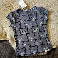 Детская футболка серая с котиками Five Stars KD0318-134p