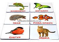 Развивающая игра Карточки Домана Випуск 1 Світ тварин «Вундеркинд с пеленок» - 6 наборов арт.096495, фото 2