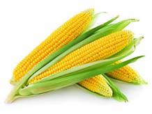 Семена ярых зерновых культур