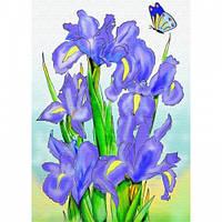 Картина раскраска на холсте Ирисы Идейка 7113/3 25х35 см с красками