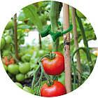 Зажимы для крепления растений, 45 шт., TYK19., фото 2