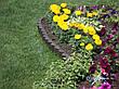 """Садова декоративна огорожа - 3 метри в упаковкі для клумби """"Бордюр садовий КЛУМБА""""  -  від виробника, фото 4"""
