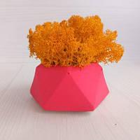 SN Кашпо Розовый Алмаз со мхом стабилизированным цвета Осенний необычный декор для дома