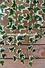 Искусственные растения - Плющ лиана, фото 6