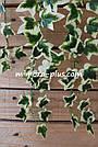 Искусственные растения - Плющ лиана, фото 7