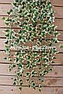 Искусственные растения - Плющ лиана, фото 5