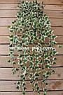 Искусственные растения - Плющ лиана, фото 2