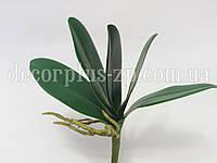 Листья орхидеи искусственные
