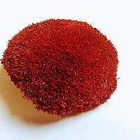 Стабилизированный мох кочка красная