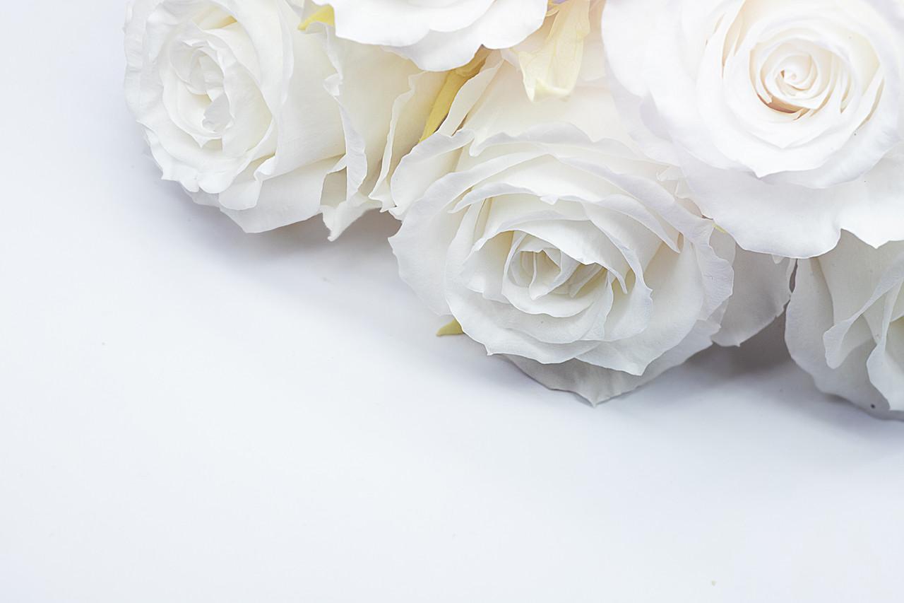 Стандарт роза Белая