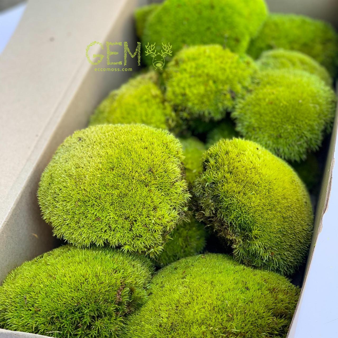 Стабілізований мох Green Ecco Moss купина лайм 0.5 кг.