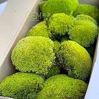 Стабілізований мох Green Ecco Moss купина лайм 0.5 кг., фото 1