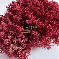 Украинский мох ягель красный
