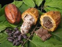 Свойства Масла Какао