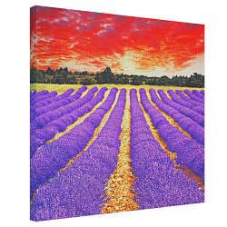 Картина на полотні 50х50 Лавандове поле (H5050_PRI001)