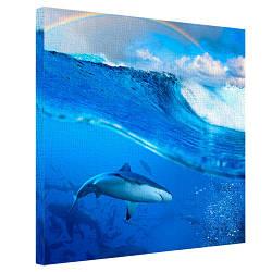 Картина на полотні 50х50 Акула (H5050_PRI002)