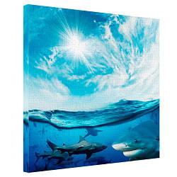 Картина на полотні 65х65 Акули (H6565_PRI001)