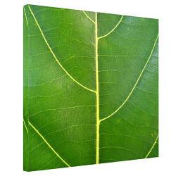 Картина на холсте Зелёный листик 65x65 см (H6565_PRI003)
