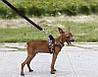 """Мягкая шлейка """"САФАРИ"""" для собаки, кошки. Шлейка для собаки, фото 2"""