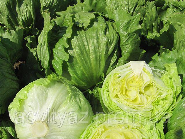 Насіння салату Едуардо, 1000 насіння