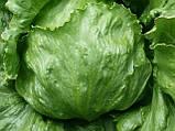 Насіння салату Едуардо, 1000 насіння, фото 2
