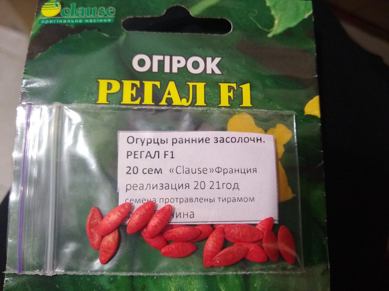 Семена огурца раннего  частично самоопыляемые гибрид Регал F1  20 семян, Clause Франция
