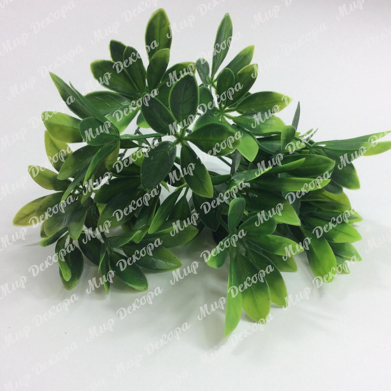Куст шефлеры, зеленый, 30 см
