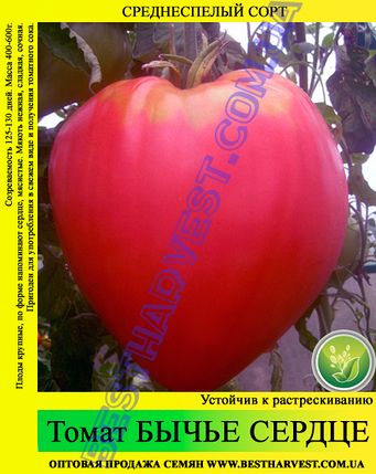 Семена томата Бычье Сердце красное 0,5кг, фото 2
