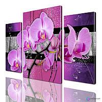 Модульные картины цветы Орхидея ADFL0140