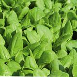 Семена шпината Корвер F1, 25 000 семян, фото 2