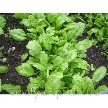 Семена шпината Корвер F1, 100 000 семян