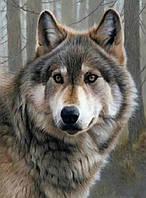 40х50 см алмазная мозаика ВОЛК вышивка картина мозаїка діамантова вишивка волчица вовк вовчиця волчара 40 х 50