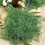 Семена укропа Голдкрон, 250 грамм, фото 2