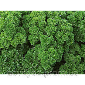 Семена петрушки Вега, 250 грамм